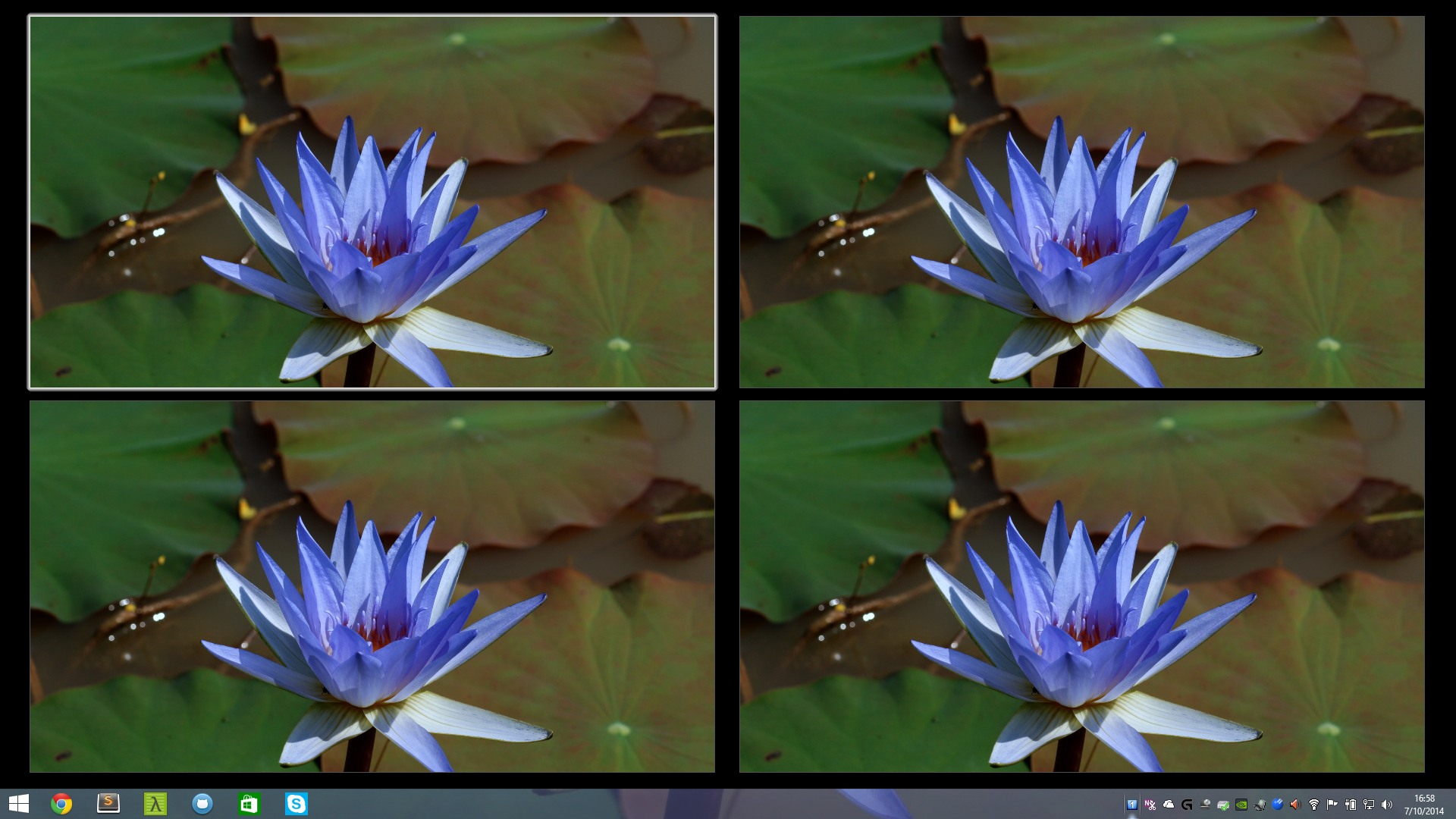 desktop lotus